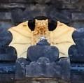 Bali-Bat